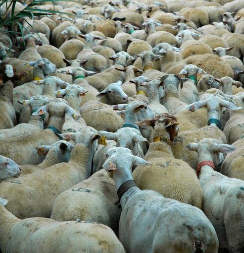 Dariaus Radzevičiaus nuotr./Avių banda Portugalijoje