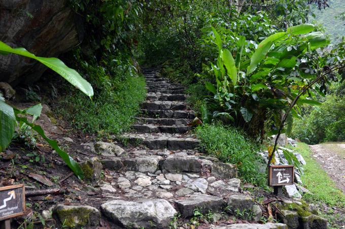 Lost Latinos nuotr./Akmeniniai laiptai veda iki Maču Pikču miesto vartų