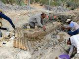AFP/Scanpix nuotr./Meksikoje aptikti dinozauro uodegos kaulai.