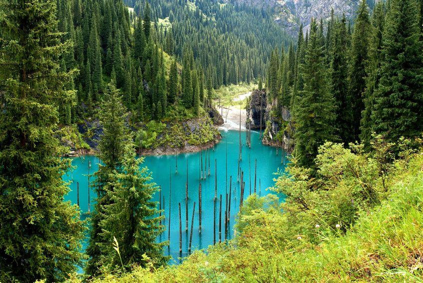 Paskendęs miškas Kaindy ežere – nuostabi gamtos išdaiga ir rojus nardytojams