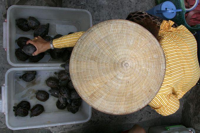 123rf.com nuotr./Vietnamiečių moteris prie aventyklos pardavinėja vėžliukus