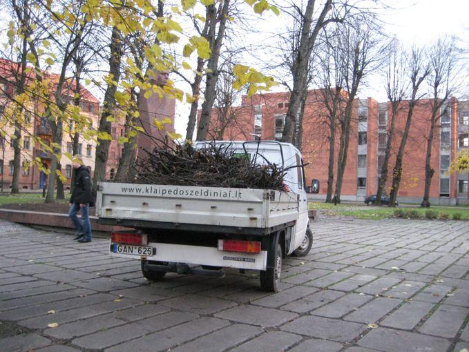 Aurelijos Kripaitės/15min.lt nuotr./Audros padariniai Klaipėdoje buvo operatyviai aalinami.