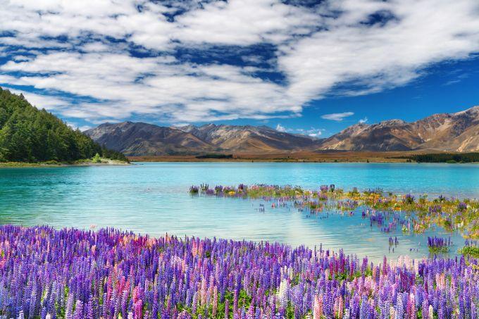 Tekapo ežeras Naujojoje Zelandijoje