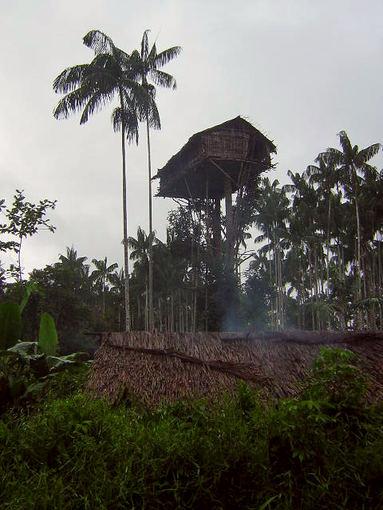 wikimedia.org nuotr./Korowai genties namai
