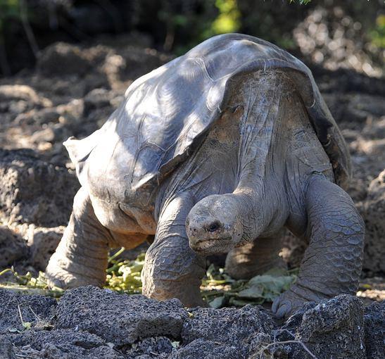 """""""Scanpix"""" nuotr./Vėžlys Galapagų salose"""