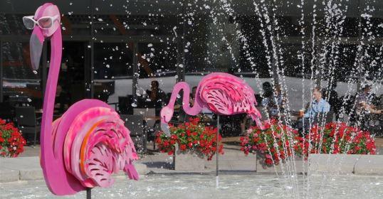 Populiariausiose sostinėse vietose apsigyveno flamingų būriai. Vilniaus sav. nuotr.