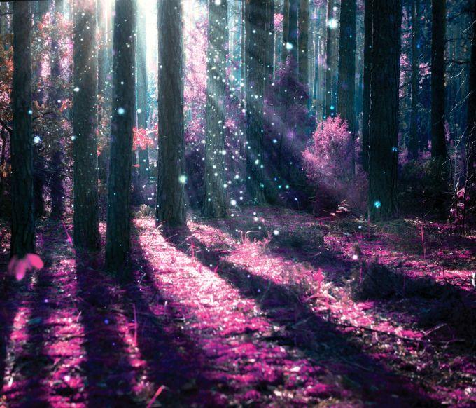 Magiškas miškas