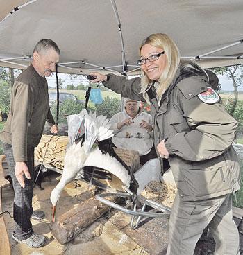 """""""Pajūrio naujienų"""" nuotr./Salantų regioninio parko direkcijos vyriausioji ekologė Asta Bagočienė (dešinėje) išpildė tautodailininkės prašymą sužieduoti jos sodyboje augintą gandrą Garį. Prieš tai paukštį dar ir pasvėrė: svarstyklės parodė 2,5 kg"""