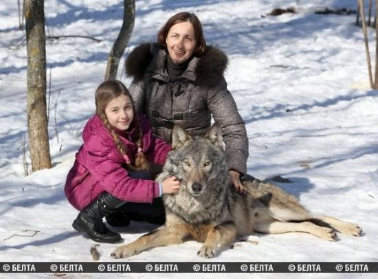 Žmonių prijaukinti vilkai