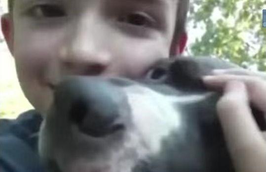 Šuo su išgelbėtu berniuku