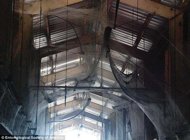 Vorai tinklais išpuošė visas vandenvalos bazės pastato patalpas