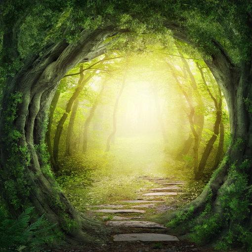 """Shuuerstock"" nuotr./Miško tunelis"