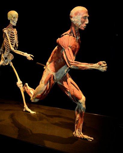 """""""Body Worlds Vital"""" nuotr./Žmogaus kūnų paroda """"Body Worlds Vital"""""""