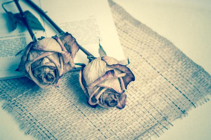 """""""Shutterstock"""" nuotr./Džiovintos rožės"""