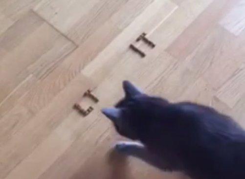Katinas orakulas