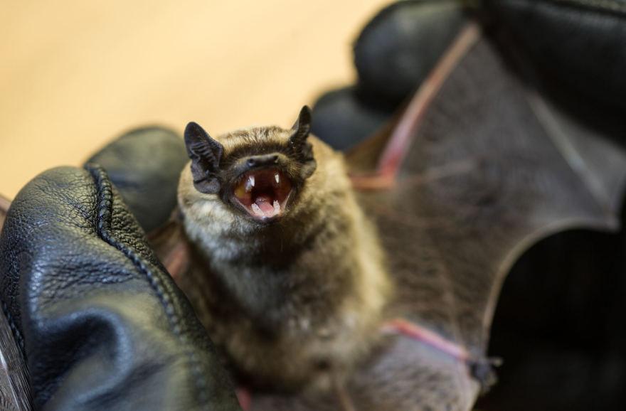 šikšnosparnių pasirinkimo sandorių valandos prekybos kambarys kriptografijai