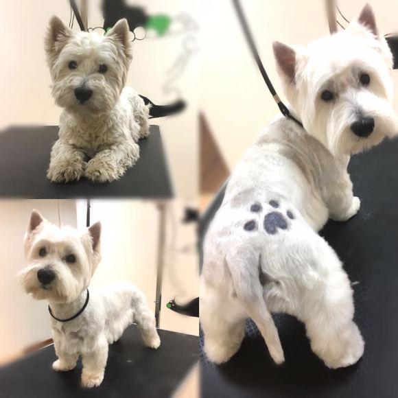 Asmeninio archyvo nuotr. /Šunų šukuosenos