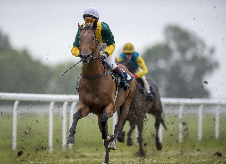 btc arklių lenktynės gyvena