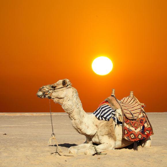 123rf.com/Sacharos dykuma