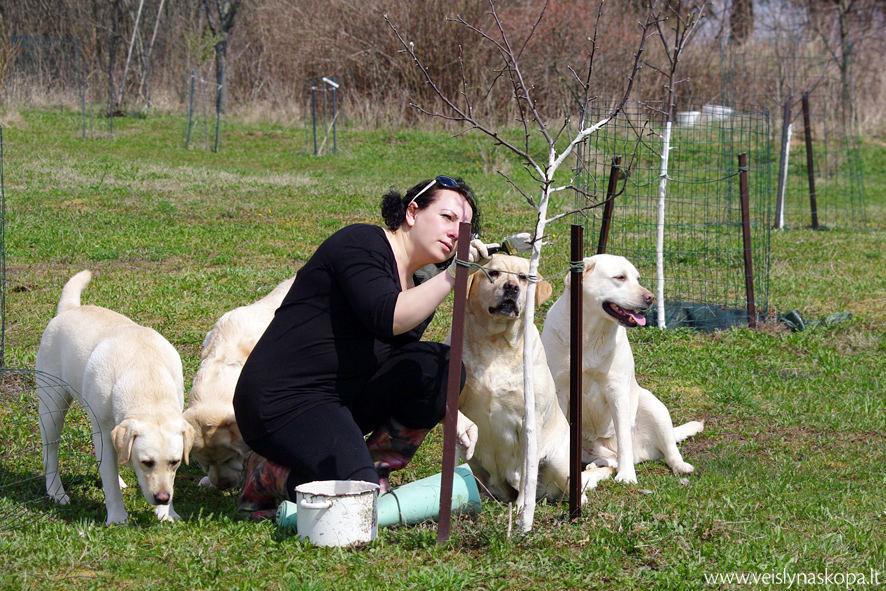 Daiva Grigonienė ir labradorai