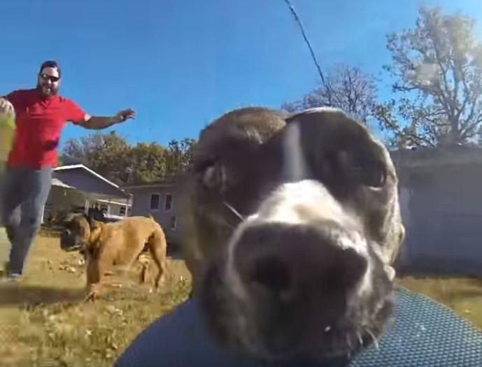 """""""Go Pro"""" kamerą nugvelbęs šuo nufilmavo savo paties gaudynes"""