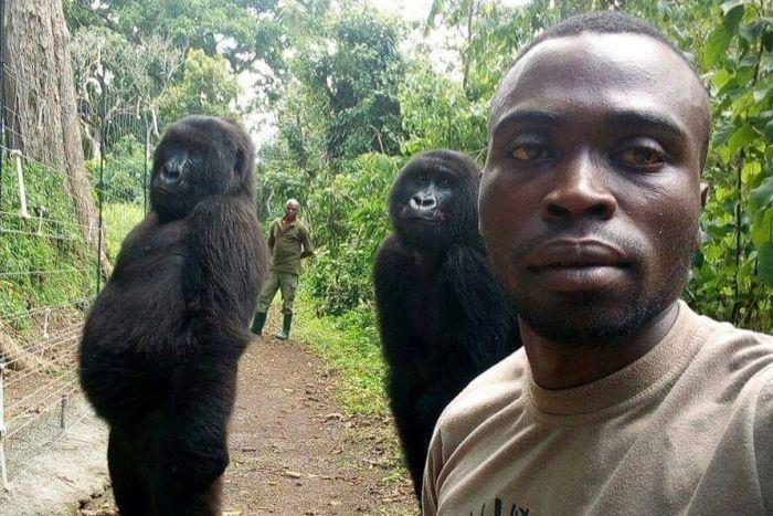 Dvi gorilos pozuoja su savo gelbėtojais