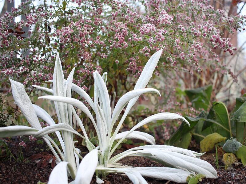 Notra  – vienas iš sausros nebijančių augalų.