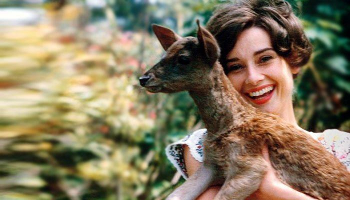Audrey Hepburn su elniuku Peppinu