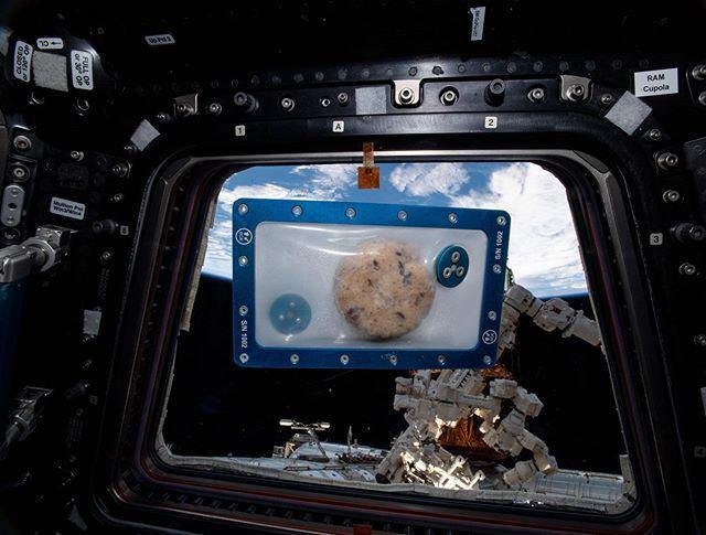 Tai gali tapti pirmojo kosmose iškelto sausainio ruošiniu