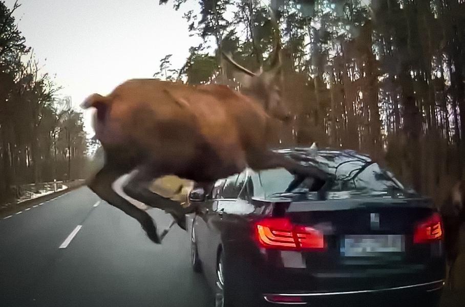 Elnio susidūrimas su BMW