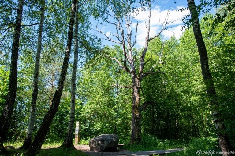 Dūkštų ąžuolyno pažintinis takas