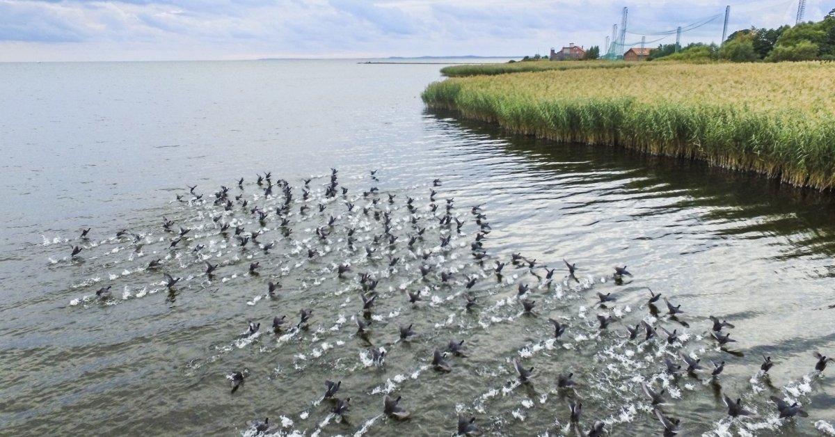 Idėjos velykinio savaitgalio kelionėms – susipažinkite su ornitologiniu turizmu Lietuvoje