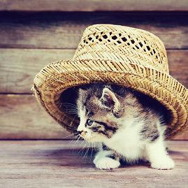 """""""Fotolia"""" nuotr./Mažas kačiukas"""