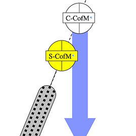 Skirtinga posūkių technika – skirtinga kūno pozicija. Šaltinis: Ramey CoachStroud