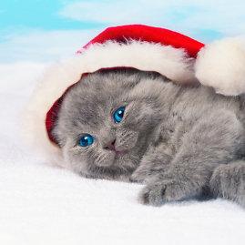 Shutterstock nuotr./Katinukas.