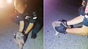 Neįprasta operacija: pareigūnai išgelbėjo viduryje kelio užmigusį apuoką