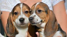 JAV pasaulį išvydo pirmoji dirbtinio apvaisinimo būdu gauta šuniukų vada