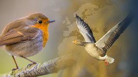 Lietuvoje įsibėgėja pavasaris – pamatykite, kokie paukščiai jau parskrido į mūsų šalį