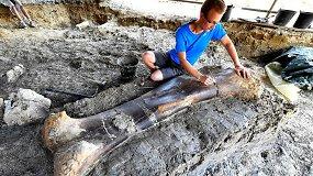 Paleontologus nustebino atradimas Prancūzijoje: rado puikiai išsilaikiusį dinozauro šlaunikaulį