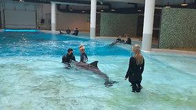 Delfinų terapijos centras plečiasi: atverti du nauji kabinetai