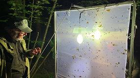 Gamtininkai atrado Lietuvoje gyvenančią Europos retenybę – salpinį pelėdgalvį