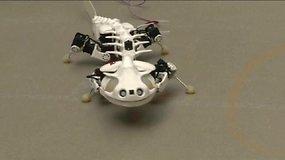 """Robotinė salamandra """"Pleurobot"""""""