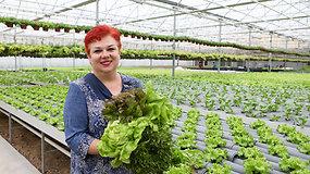Agronomė apie Lietuvoje auginamų salotų įvairovę