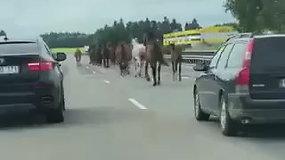Tarsi Laukiniai Vakarai: šalia Vilniaus – keliu lekiantys žirgai