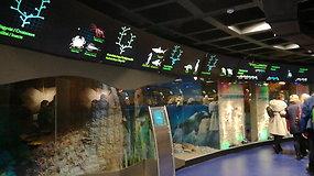 Muziejaus lankytojai susipažins su Baltijos jūros medūzomis.
