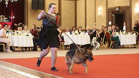 Lietuvos šunų Top 16: gražiausiu išrinktas vokiečių aviganis
