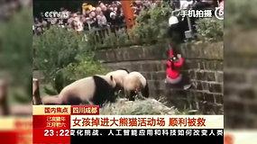 Kinijoje apsaugos darbuotojai išgelbėjo į pandų aptvarą įkritusią mergaitę