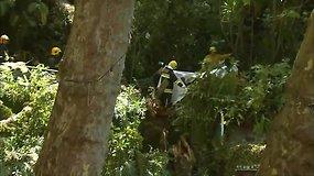 Madeiroje nuvirtus dideliam medžiui žuvo 13 žmonių