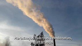 Baltarusijoje auginamus cukraus kristalus pamėgo Moldova ir Kazachstanas