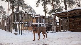 Vilniaus čigonų tabore šiuo metu vergauja apie 15 žmonių